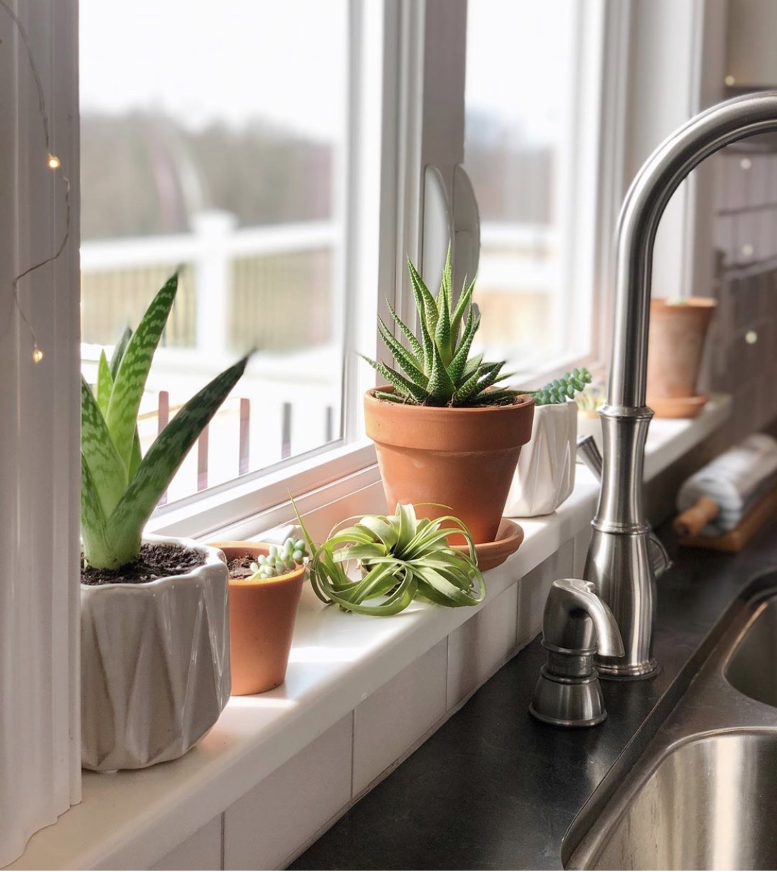 10 House Plants That Are Great For Your