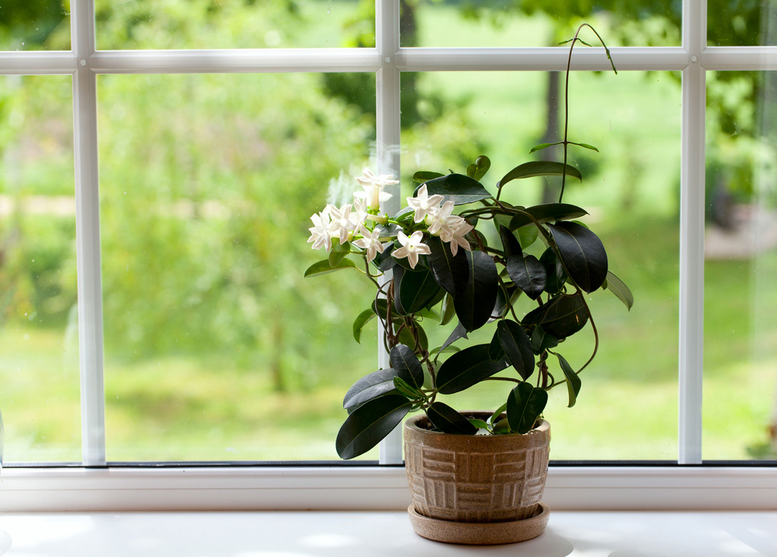 10 House Plants That are Great For Your Kitchen