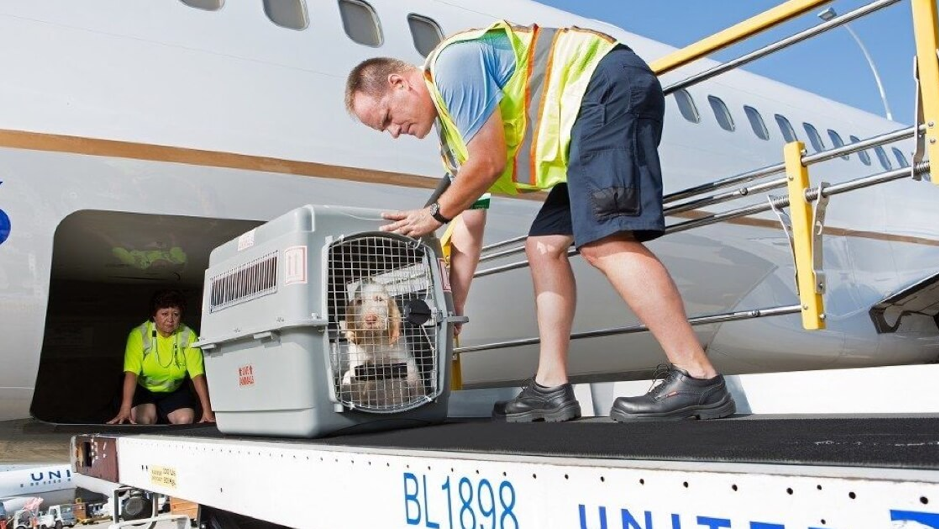 Travel Abroad with Your Pet