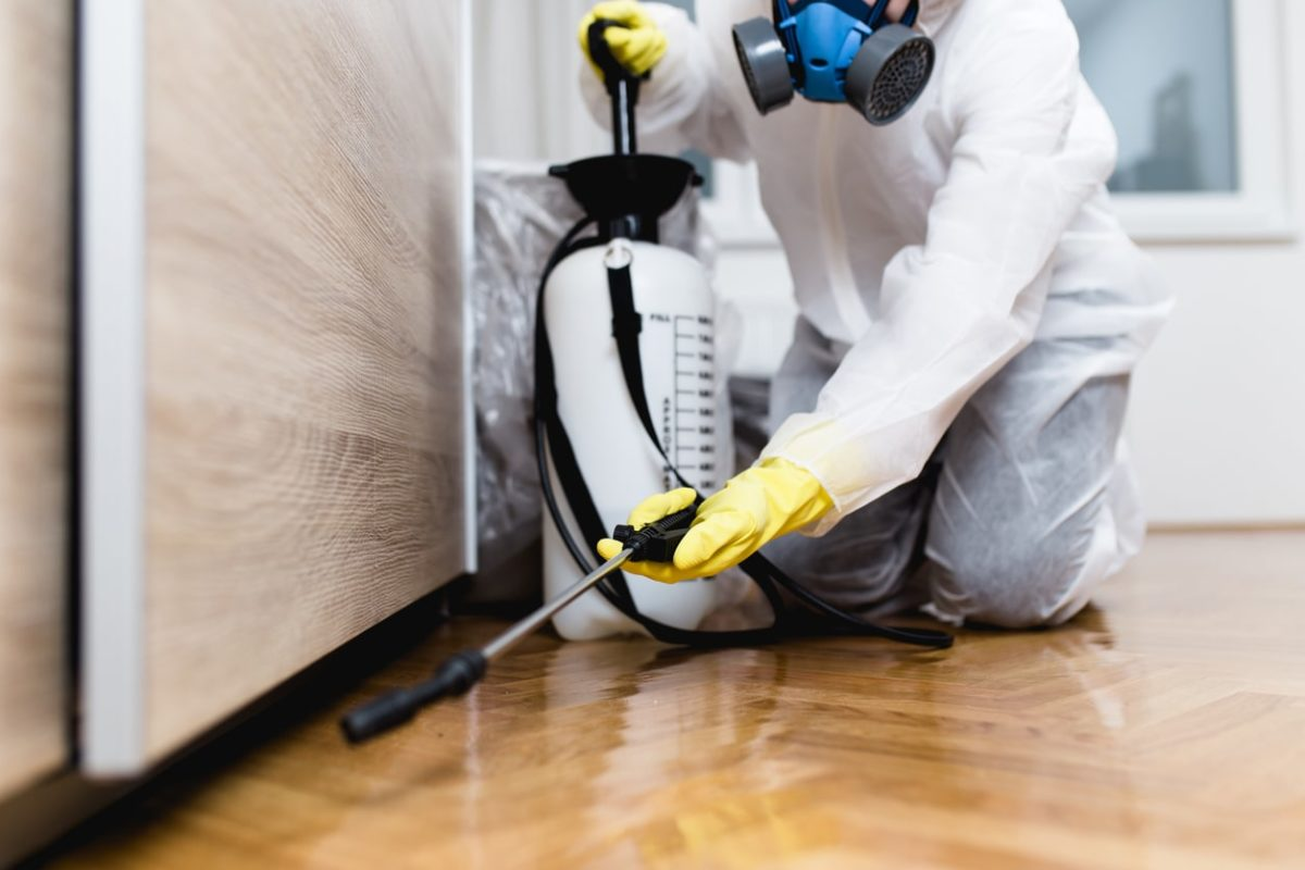 6 Signs You Need to Hire Pest Control Services ASAP